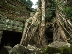 We love the overgrown look of Ta Prohm - definitely a highlight to any visit of the Temples of Angkor