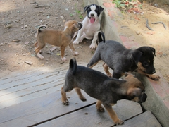 Over 8000 victim remains have been uncovered at Choeung Ek's killing fields. Seeing these puppies frolicking around brought a light hearted moment to our heart wrenching visit of this mass grave