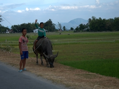 Young boy riding a water buffalo; Samosir Island