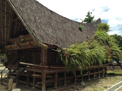 Ferns growing over a traditional Batak house