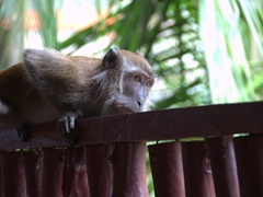 Cheeky monkey on our front porch; Rain Forest Guesthouse