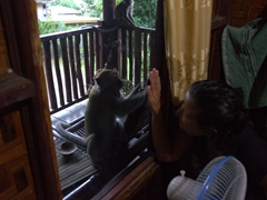Monkey see, monkey do - Becky having fun while a monkey mimics her every move; Bukit Lawang