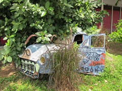 Overgrown car