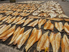 Fish drying in the sun; Penang