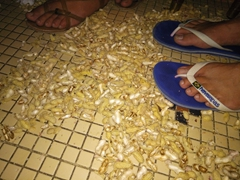 It is customary to fling peanut shells on the floor at the Long Bar - Robby has amassed quite a collection