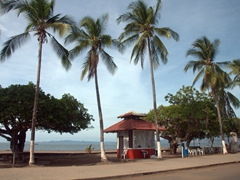 Coconut trees line the beach front in Puntarenas