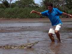 Crocodile man briefly losing his balance as a 2 year old juvenile female crocodile approaches him