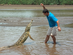 We watched in amazement as our boat captain fearlessly faced a wild river crocodile to feed it chunks of chicken
