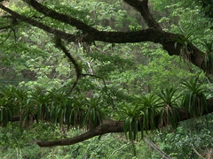 Beautiful foliage at Villa Lapas