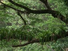 Beautiful foliage at Villa Lapas