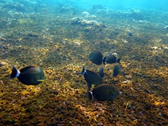 We followed these fish swimming in formation until they got a bit too jittery; La Entrega
