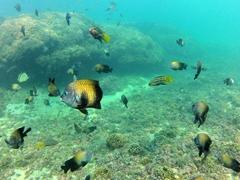 An underwater aquarium while snorkeling at La Entrega