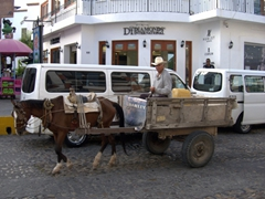 This traditional mode of transport (horse & cart) is an unfamiliar sight in modern Puerto Vallarta