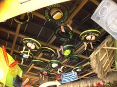 Bottoms Up! Senor Frogs ceiling decor in Puerto Vallarta