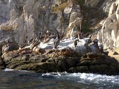 Pelican rock; Cabo San Lucas