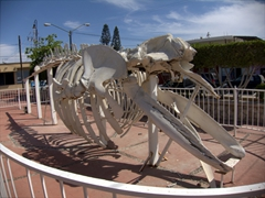 A whale skeleton outside Cabo San Lucas museum