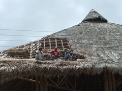 Workers repairing a thatch roof; near Uxmal