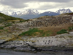 Distant view of the Beagle Channel cormorant colony