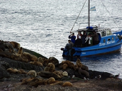 Tours in the Beagle Channel offer an up close and personal experience with sea lions