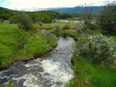 A pretty stream in Tierra del Fuego national park