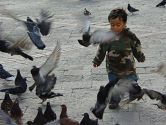 Young boy chasing pigeons nearby Santo Domingo Church