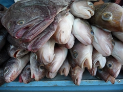Fish for sale at the outdoor market
