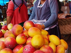 Large mangoes for sale and cheap! We love the fresh fruits in Ecuador
