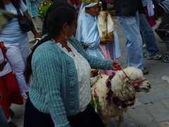 Leading an unwilling sheep through Cuenca's streets