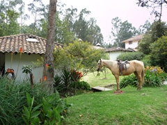 We checked on horseback riding opportunities at this hacienda but it was a bit too pricey for us