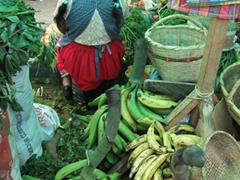 Large plantains for sale; Gualaceo market