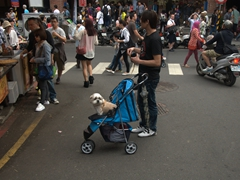 In Taiwan, dogs get their own strollers!