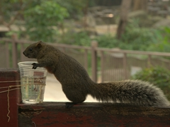 Overly friendly squirrels; Confucian Temple in Tainan