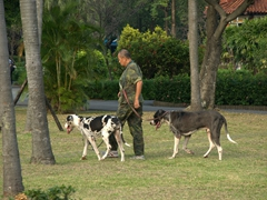 Walking his dogs through the 228 Peace Park