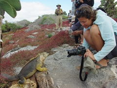 This land iguana approached Becky to get its up close and personal head shot