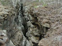 A lava crevice on Genovesa, one of the northernmost islands in the Galapagos (as a result, most cruises do not visit this magical island)