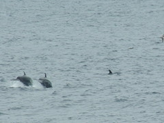 We lost count of how many dolphins we could see around Darwin's Island