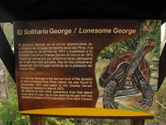 This sign tells the sad tale of Lonesome George. His efforts at mating with two female tortoises from a nearby island have been in vain