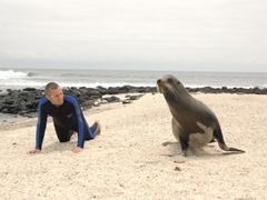 Robby mimics a bull sea lion; San Cristobal's Sea Lion Colony (La Loberia)