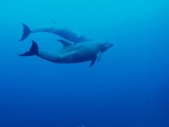 Bottlenose dolphins quickly became our favorite mammals, with their playful antics and aggressive hunting techniques (watching massive schools of fish disappear in a split second when the dolphins are on the hunt is unforgettable!)