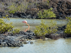 We were happy to spot a pink flamingo feeding at Bachas Beach