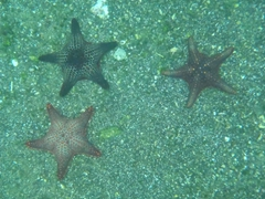 These starfish were way more vivid in real life...snorkel at Bartolome and see for yourself!