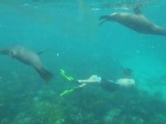 Luke playing with sea lions; Santa Fe