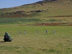 Robby checks out the Gentoo Penguins; Carcass Island