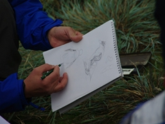 Edward Rooks leads a field workshop on drawing rockhopper penguins; West Point Island