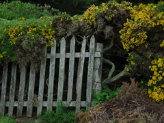 Wooden gate on West Point Island