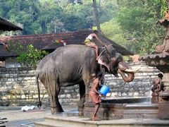 Young boys using a public fountain to give their elephant a well deserved shower; Kandy