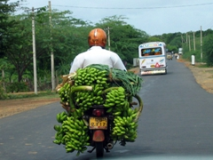 A motorcyclist overloaded with bananas overtakes our vehicle