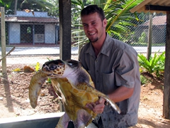 Robby struggles to lift a very heavy 2 year old sea turtle at the Kosgoda Sea Turtle Conservation Project