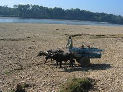 An ox drawn cart; Chitwan National Park