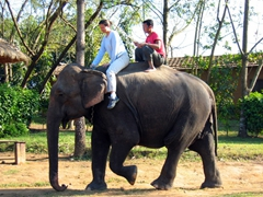 Becky guiding her elephant after a quick lesson, Chitwan National Park